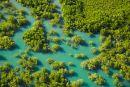 Mangroves, Charles Darwin National Park, Darwin, Northern Territory, Australia - aerial