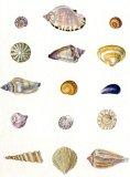 Shells II