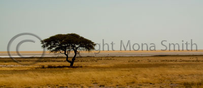 Etosha Pan.  Wildlife Photographer of the Year 2010 Semifinalist