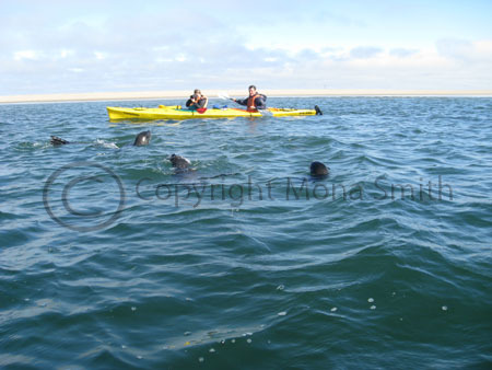 Kayaking with Eco Marine Kayak Tours, Walvis Bay, Namibia