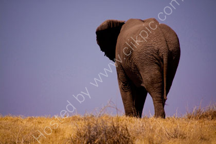 Elephant over the hill