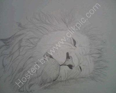 Sleeping Male Lion Sketch. Mounted.