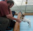 Playful ship's dog