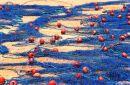 Maltese nets