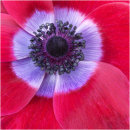 Red Flower Centre